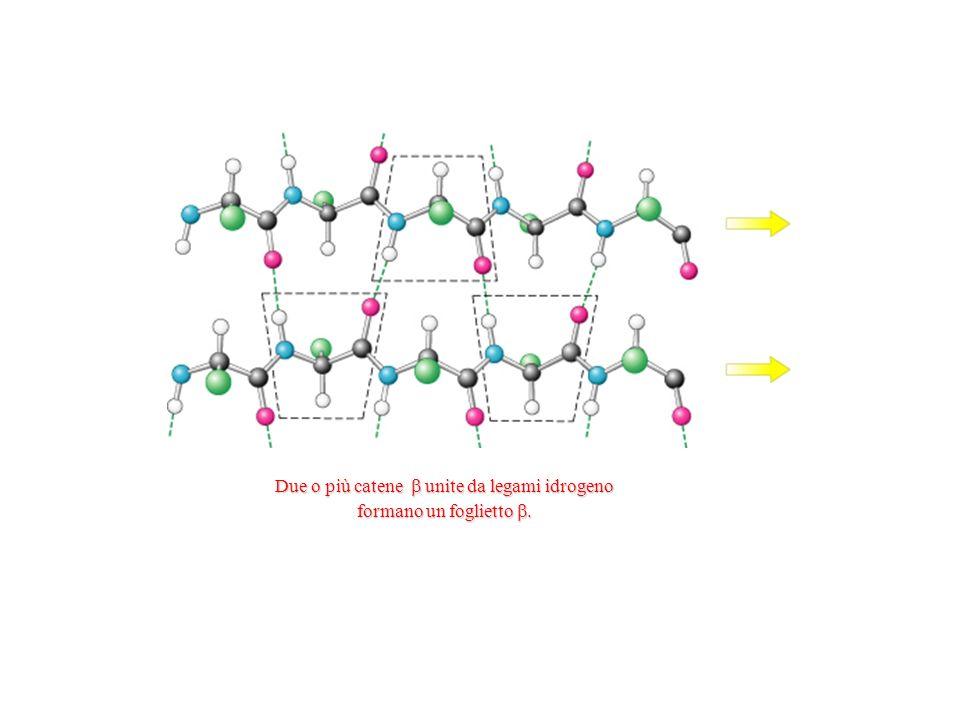 Due o più catene unite da legami idrogeno formano un foglietto.