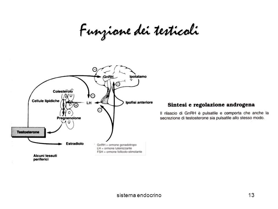 sistema endocrino13 Funzione dei testicoli