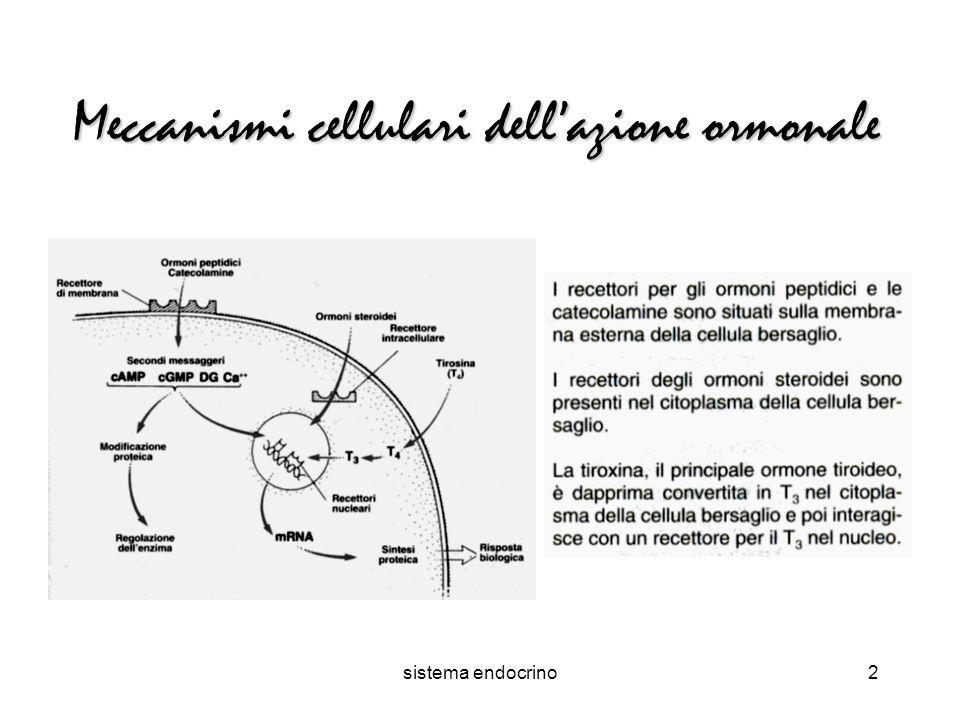 sistema endocrino2 Meccanismi cellulari dellazione ormonale
