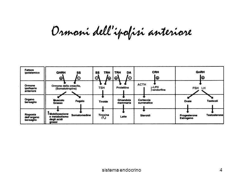 sistema endocrino4 Ormoni dellipofisi anteriore