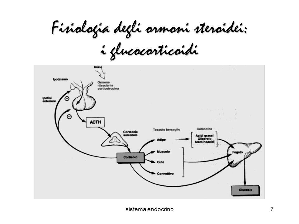 sistema endocrino7 Fisiologia degli ormoni steroidei: i glucocorticoidi