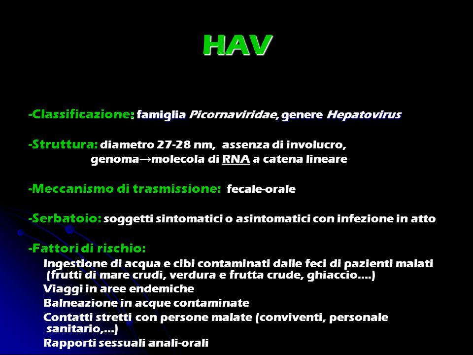 HAV : famiglia, genere Hepatovirus -Classificazione: famiglia Picornaviridae, genere Hepatovirus -Struttura: diametro 27-28 nm, assenza di involucro,