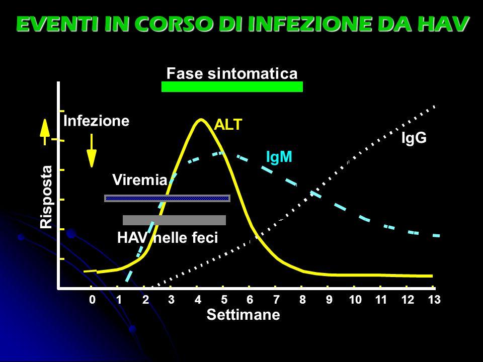 012345678910111213 Settimane Risposta Fase sintomatica ALT IgM IgG HAV nelle feci Infezione Viremia EVENTI IN CORSO DI INFEZIONE DA HAV