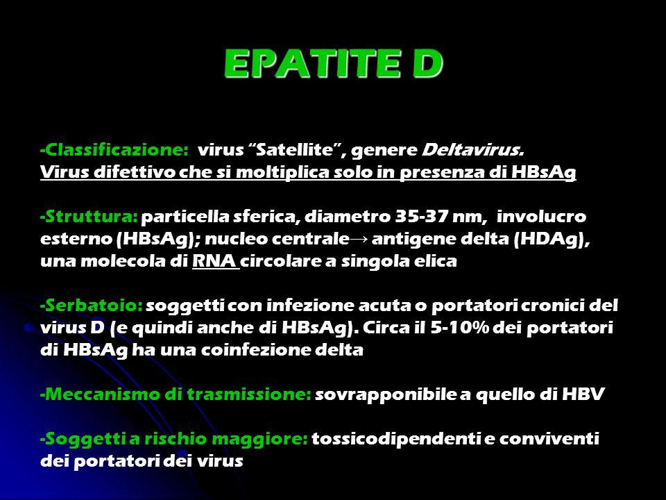 EPATITE D -Classificazione: virus Satellite, genere Deltavirus. Virus difettivo che si moltiplica solo in presenza di HBsAg -Struttura: particella sfe
