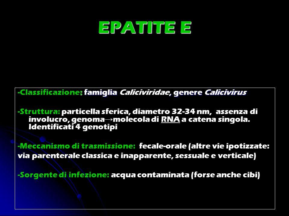 EPATITE E : famiglia, genere Calicivirus -Classificazione: famiglia Caliciviridae, genere Calicivirus -Struttura: particella sferica, diametro 32-34 n