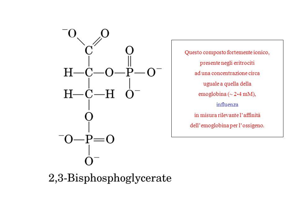 Questo composto fortemente ionico, presente negli eritrociti ad una concentrazione circa uguale a quella della emoglobina (~ 2-4 mM), influenza in mis