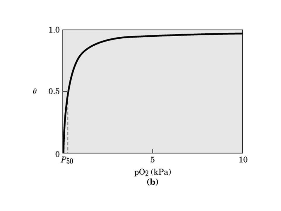 Il legame cooperativo dellO 2 allHb permette di trasportare una quantità di O 2 1,7 (66/38) volte maggiore di quella che sarebbe trasportata se i siti fossero indipendenti.