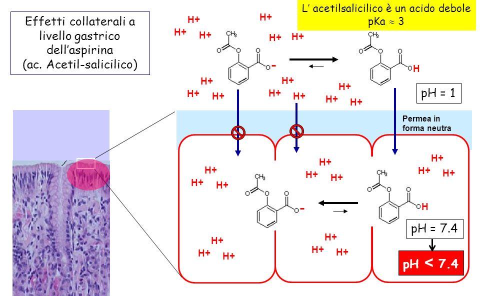 H H+ pH = 7.4 Effetti collaterali a livello gastrico dellaspirina (ac. Acetil-salicilico) H L acetilsalicilico è un acido debole pKa 3 H+ pH = 1 pH <