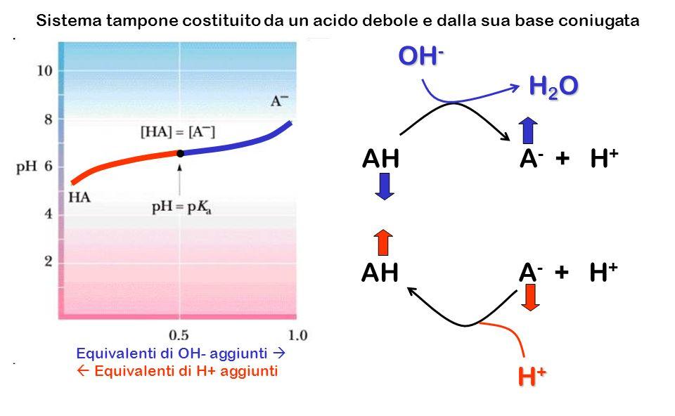 AH A - + H + H+H+H+H+ OH - Equivalenti di OH- aggiunti Equivalenti di H+ aggiunti H2OH2OH2OH2O Sistema tampone costituito da un acido debole e dalla s