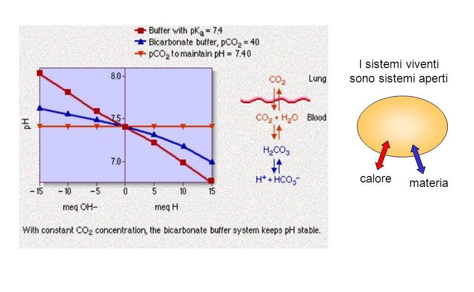 calore materia I sistemi viventi sono sistemi aperti