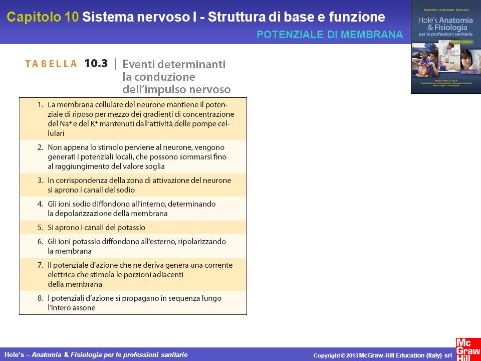 Capitolo 10 Sistema nervoso I - Struttura di base e funzione Holes – Anatomia & Fisiologia per le professioni sanitarie Copyright © 2013 McGraw-Hill Education (Italy) srl POTENZIALE DI MEMBRANA