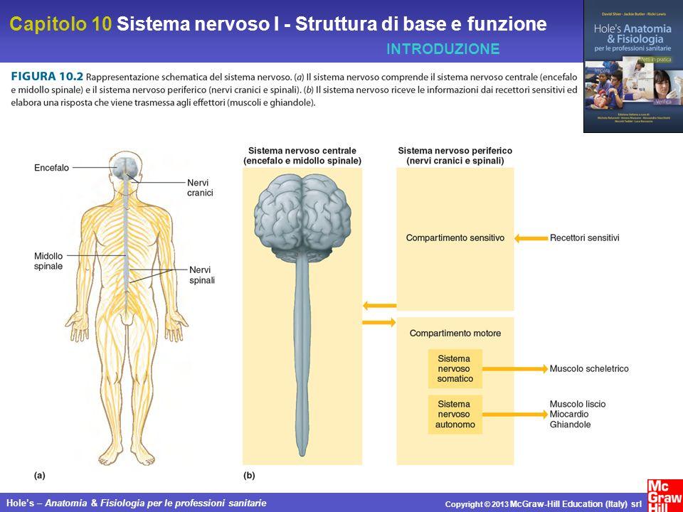 Capitolo 10 Sistema nervoso I - Struttura di base e funzione Holes – Anatomia & Fisiologia per le professioni sanitarie Copyright © 2013 McGraw-Hill Education (Italy) srl CELLULE DEL SISTEMA NERVOSO