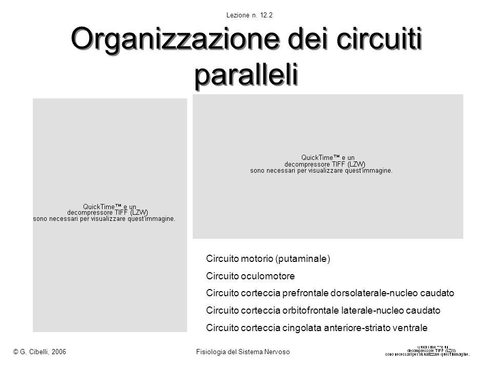 Organizzazione dei circuiti paralleli Circuito motorio (putaminale) Circuito oculomotore Circuito corteccia prefrontale dorsolaterale-nucleo caudato C