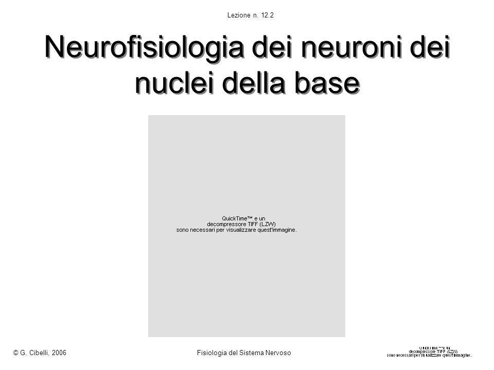 Neurofisiologia dei neuroni dei nuclei della base © G. Cibelli, 2006 Fisiologia del Sistema Nervoso Lezione n. 12.2