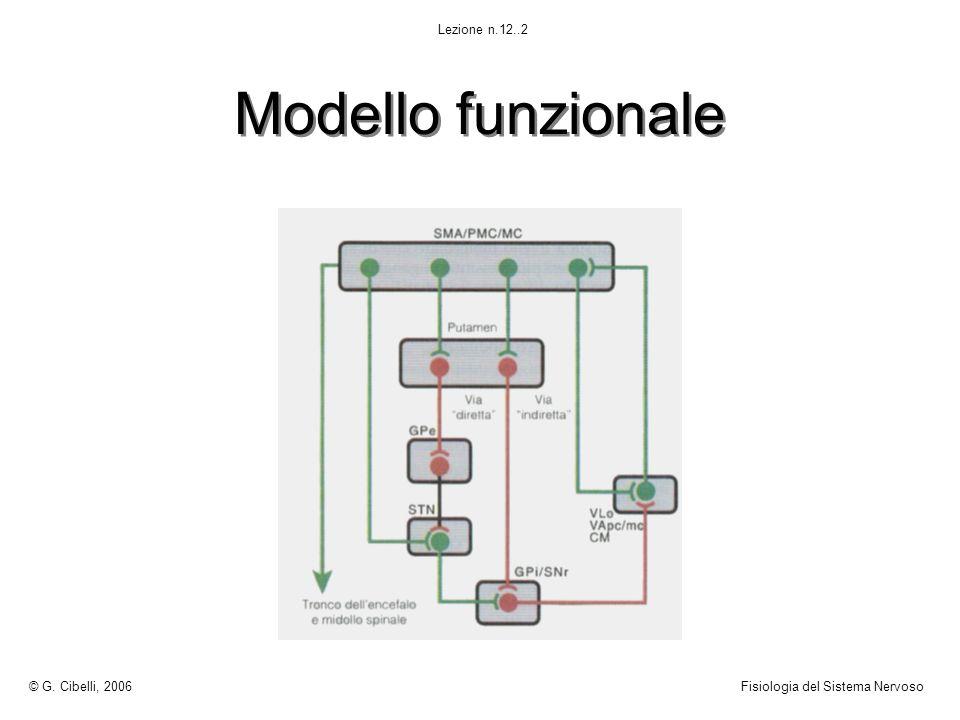 Modello funzionale © G. Cibelli, 2006Fisiologia del Sistema Nervoso Lezione n.12..2