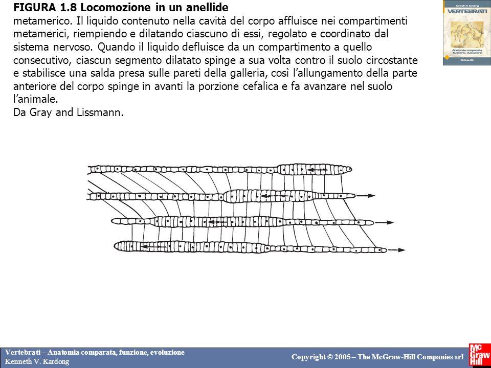 Vertebrati – Anatomia comparata, funzione, evoluzione Kenneth V. Kardong Copyright © 2005 – The McGraw-Hill Companies srl FIGURA 1.8 Locomozione in un
