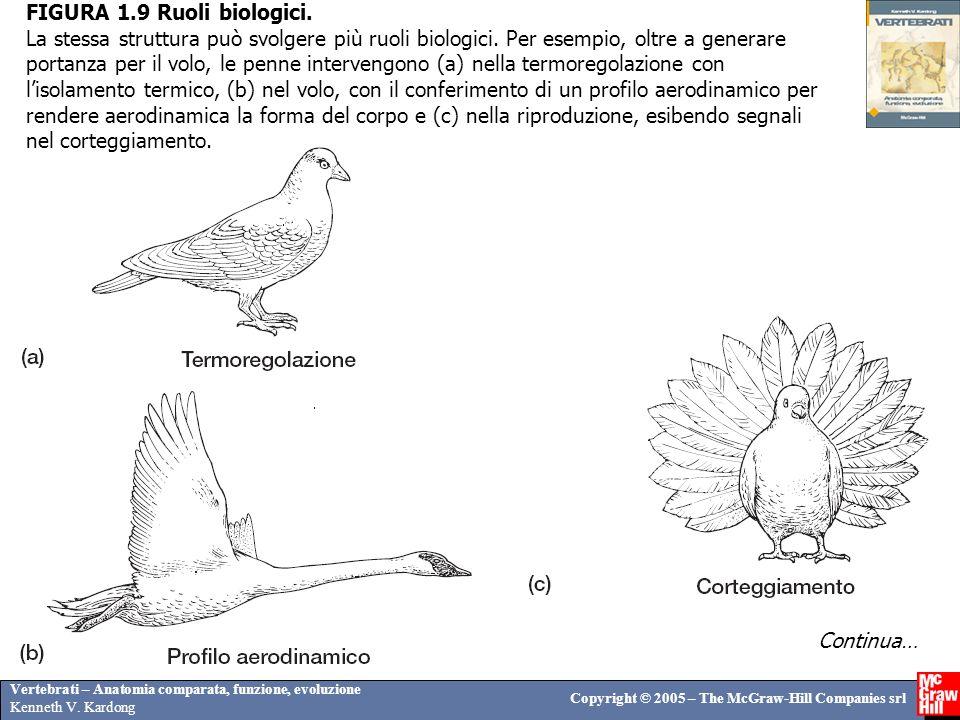 Vertebrati – Anatomia comparata, funzione, evoluzione Kenneth V. Kardong Copyright © 2005 – The McGraw-Hill Companies srl FIGURA 1.9 Ruoli biologici.