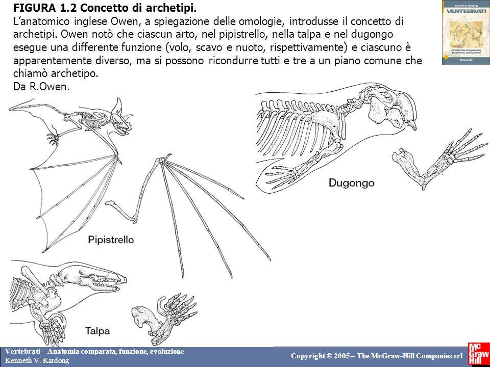 Vertebrati – Anatomia comparata, funzione, evoluzione Kenneth V. Kardong Copyright © 2005 – The McGraw-Hill Companies srl FIGURA 1.2 Concetto di arche
