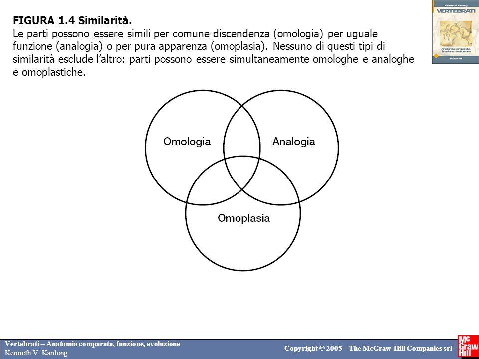 Vertebrati – Anatomia comparata, funzione, evoluzione Kenneth V. Kardong Copyright © 2005 – The McGraw-Hill Companies srl FIGURA 1.4 Similarità. Le pa