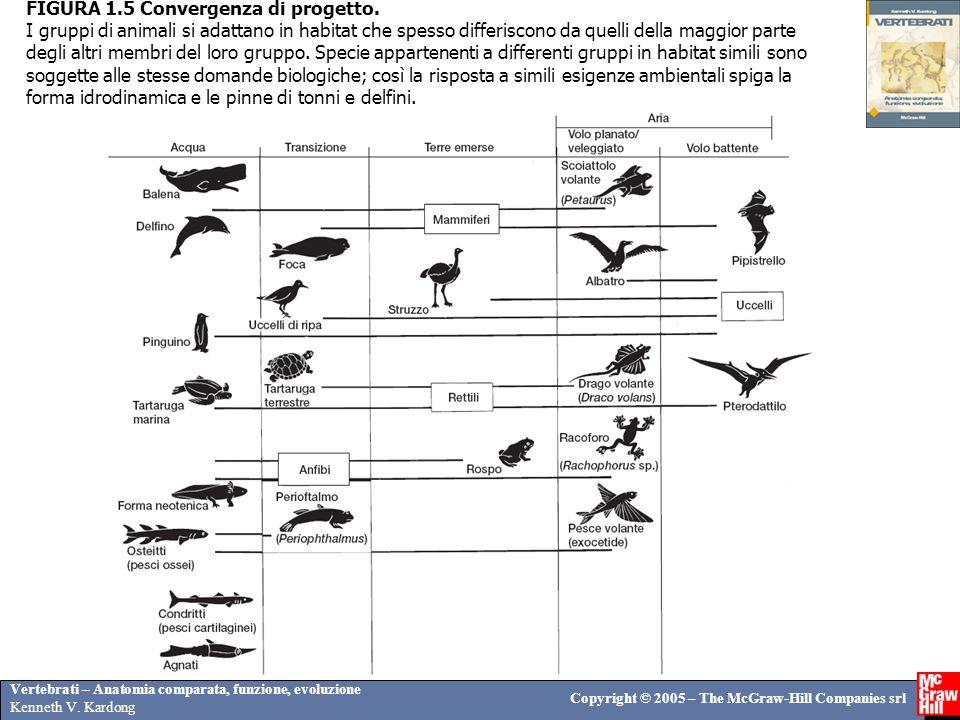 Vertebrati – Anatomia comparata, funzione, evoluzione Kenneth V. Kardong Copyright © 2005 – The McGraw-Hill Companies srl FIGURA 1.5 Convergenza di pr