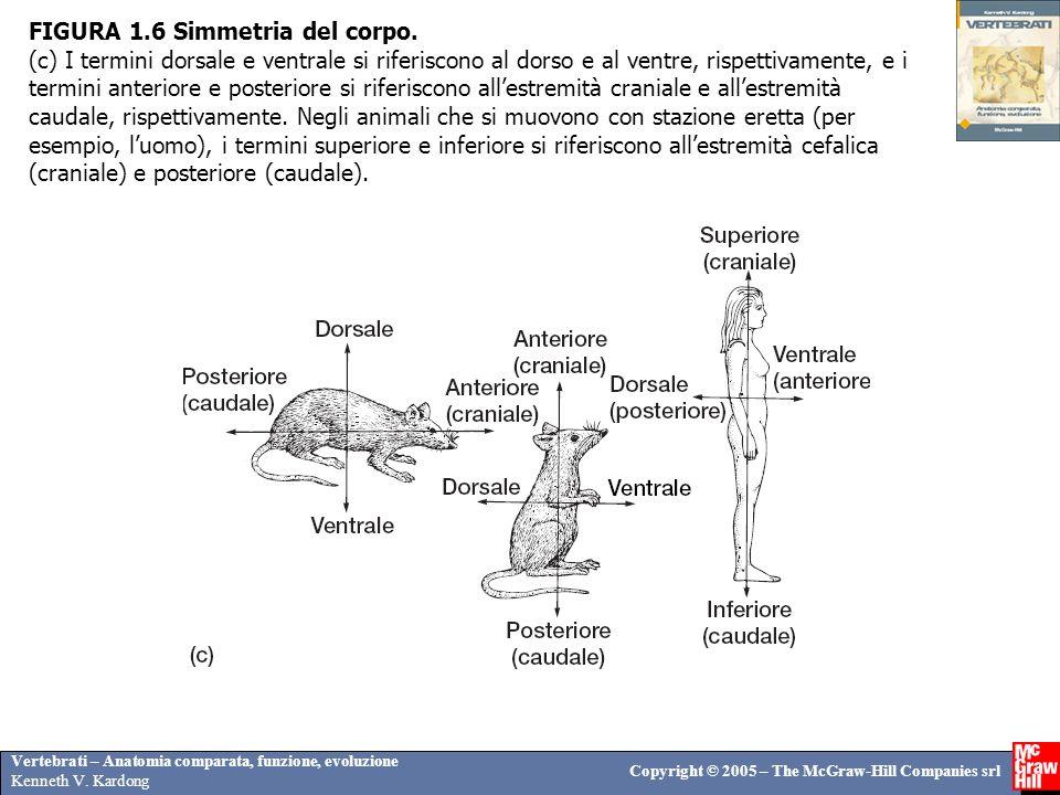 Vertebrati – Anatomia comparata, funzione, evoluzione Kenneth V. Kardong Copyright © 2005 – The McGraw-Hill Companies srl FIGURA 1.6 Simmetria del cor