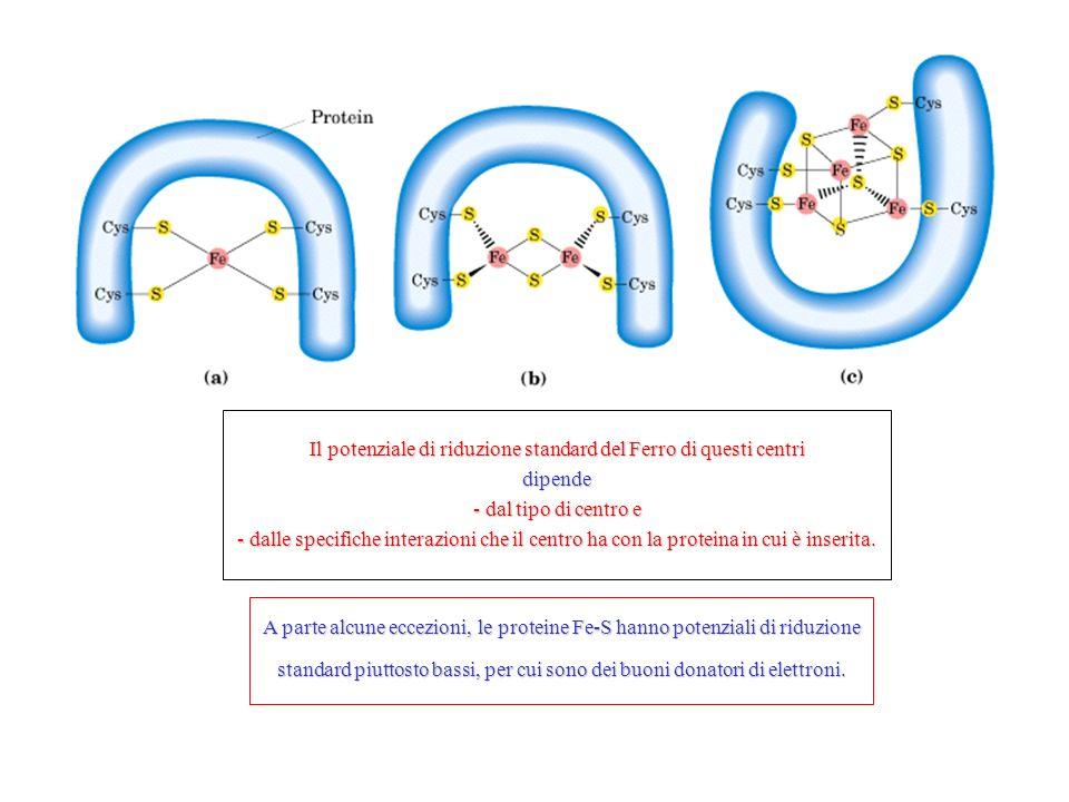 Il potenziale di riduzione standard del Ferro di questi centri dipende - dal tipo di centro e - dalle specifiche interazioni che il centro ha con la proteina in cui è inserita.