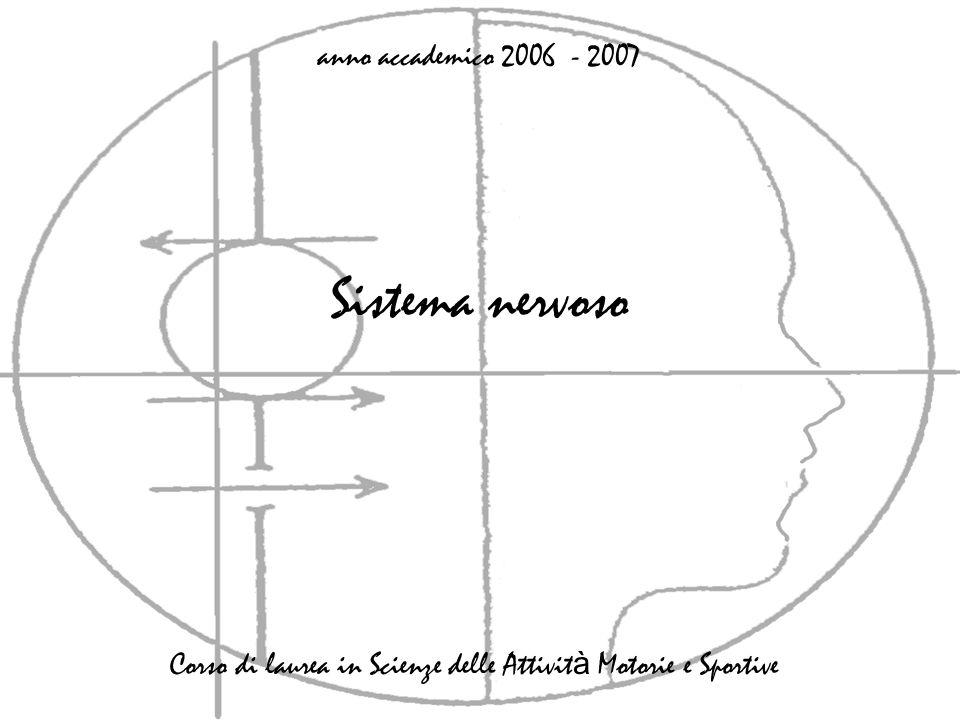 Sistema nervoso anno accademico 2006 - 2007 Corso di laurea in Scienze delle Attivit à Motorie e Sportive