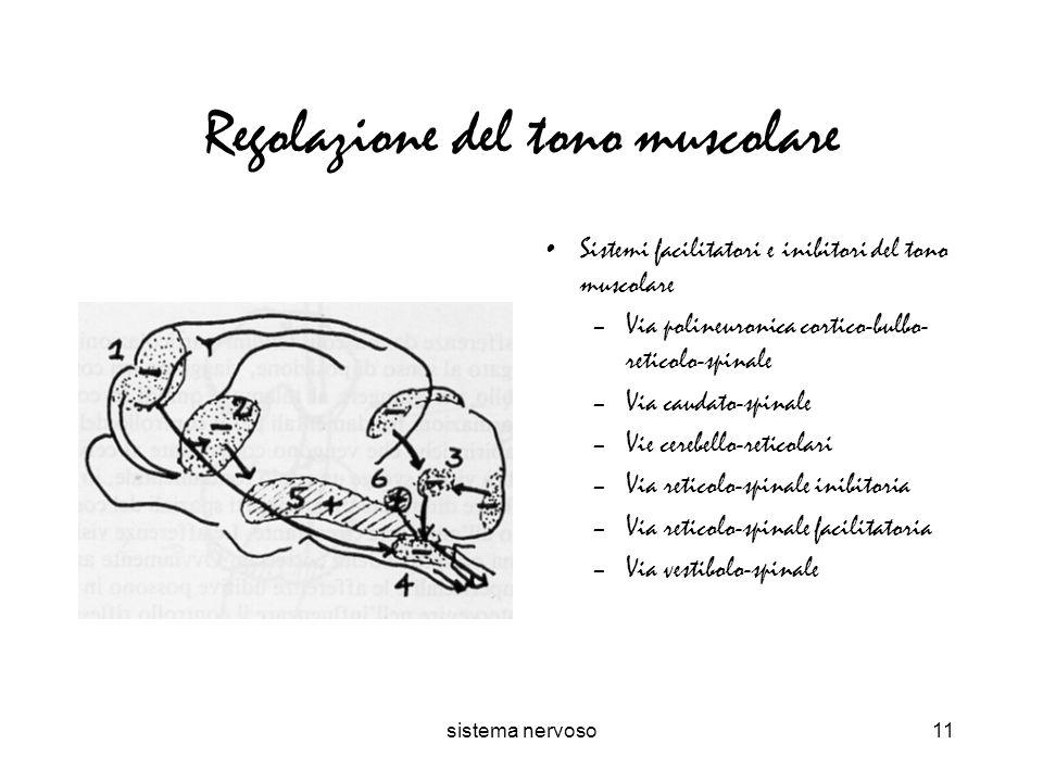 sistema nervoso11 Regolazione del tono muscolare Sistemi facilitatori e inibitori del tono muscolare –Via polineuronica cortico-bulbo- reticolo-spinal