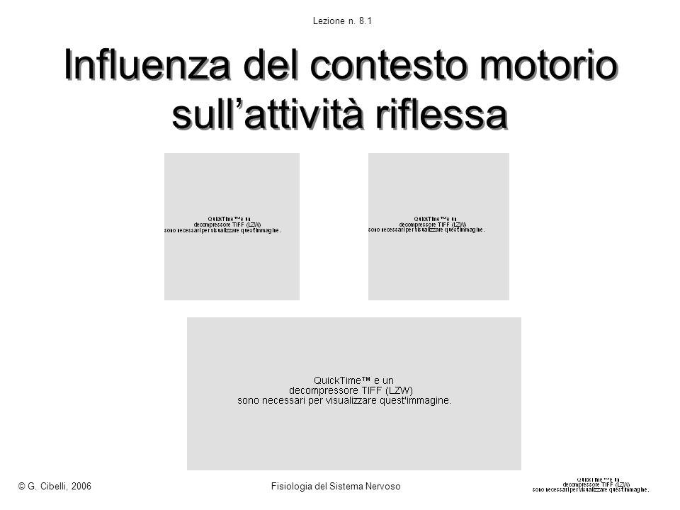 Influenza del contesto motorio sullattività riflessa © G. Cibelli, 2006 Fisiologia del Sistema Nervoso Lezione n. 8.1