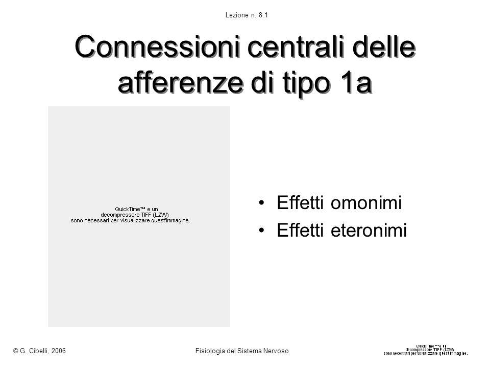 Connessioni centrali delle afferenze di tipo 1a Effetti omonimi Effetti eteronimi © G. Cibelli, 2006 Fisiologia del Sistema Nervoso Lezione n. 8.1