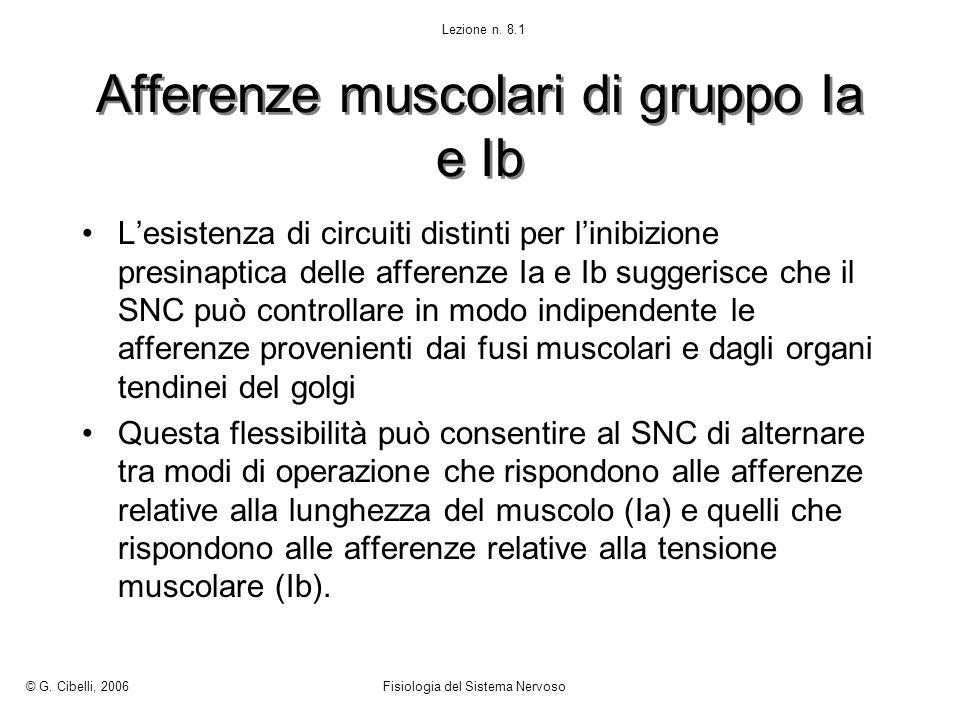 Afferenze muscolari di gruppo Ia e Ib Lesistenza di circuiti distinti per linibizione presinaptica delle afferenze Ia e Ib suggerisce che il SNC può c
