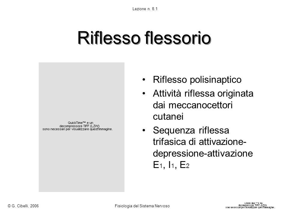Riflesso flessorio Riflesso polisinaptico Attività riflessa originata dai meccanocettori cutanei Sequenza riflessa trifasica di attivazione- depressio