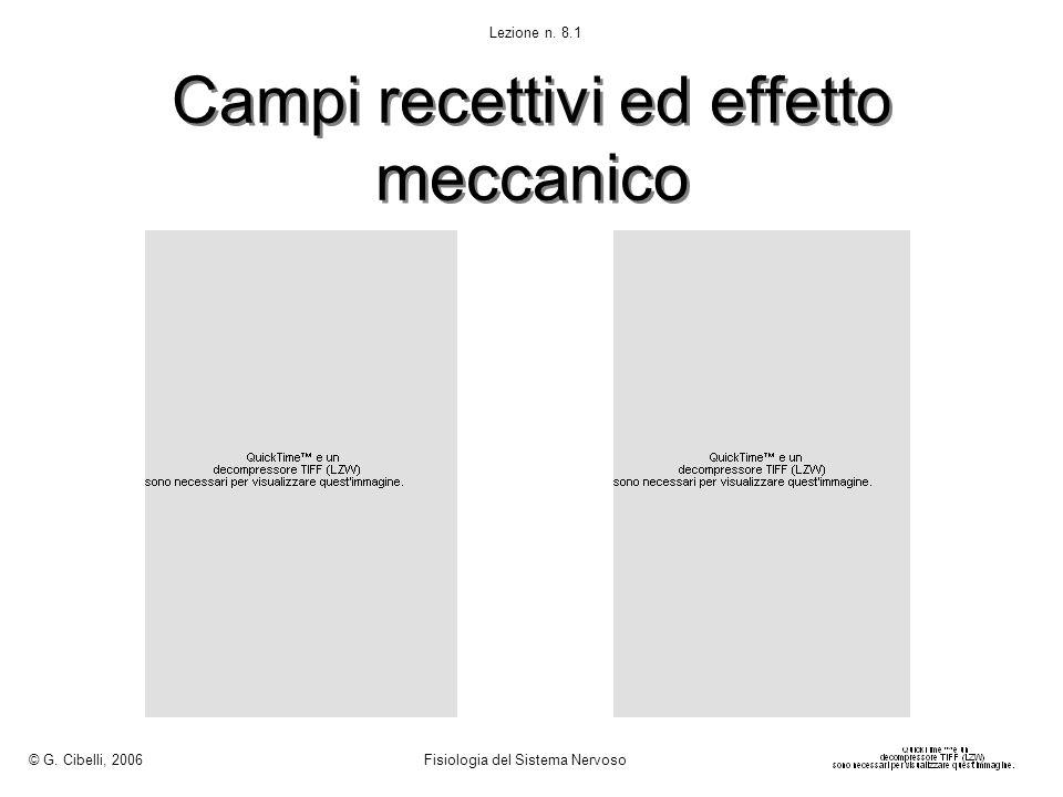Campi recettivi ed effetto meccanico © G. Cibelli, 2006 Fisiologia del Sistema Nervoso Lezione n. 8.1