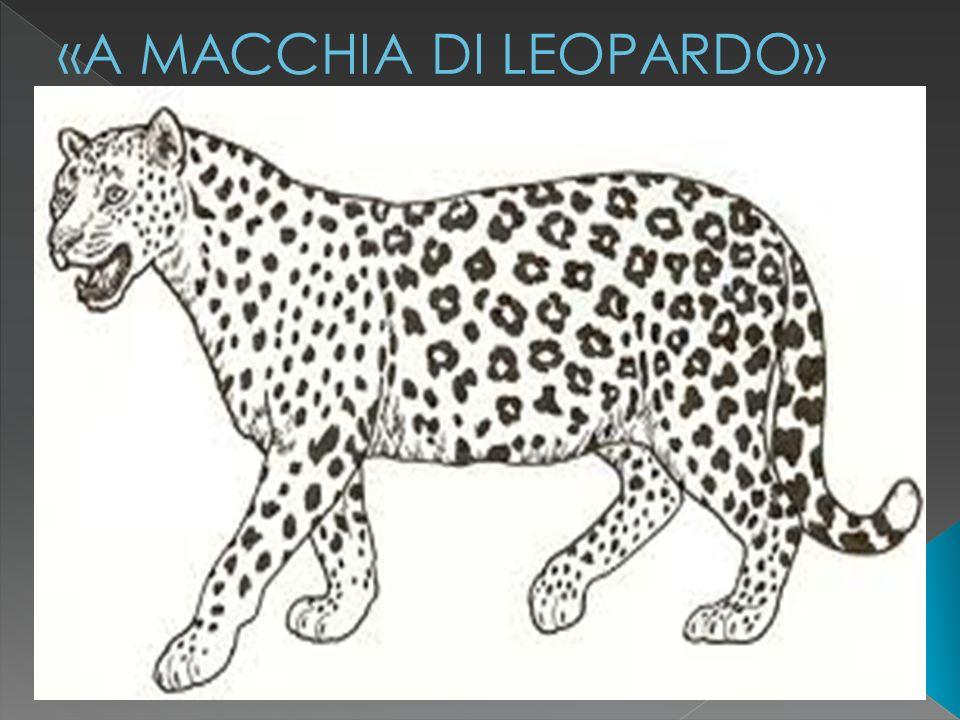 a cura isp luigi torchio 11 «A MACCHIA DI LEOPARDO»