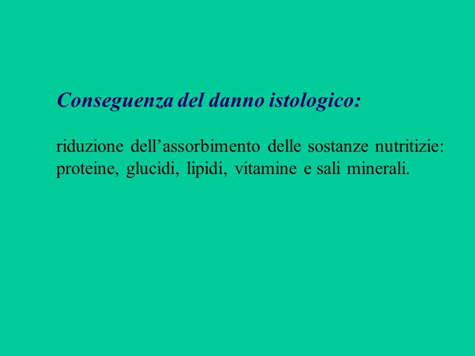 Conseguenza del danno istologico: riduzione dellassorbimento delle sostanze nutritizie: proteine, glucidi, lipidi, vitamine e sali minerali.