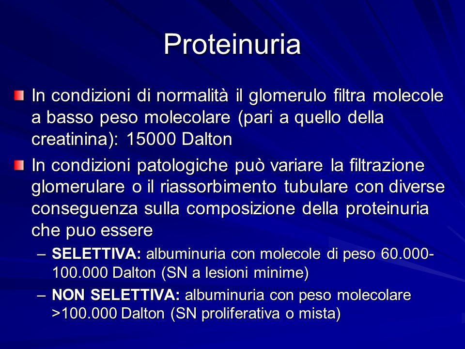 Proteinuria In condizioni di normalità il glomerulo filtra molecole a basso peso molecolare (pari a quello della creatinina): 15000 Dalton In condizio