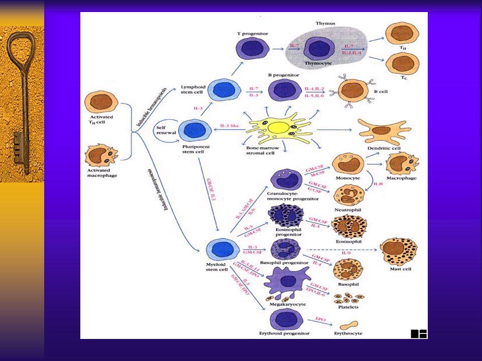 MODIFICAZIONI DELLEMOCROMO IN CORSO DI MALATTIE INFETTIVE PERTOSSE (Gram -) Fase catarrale (prima - seconda settimana) GB nella norma o lievemente aumentati Fase accessuale (seconda – sesta settimana) GB: 5–15.000/mmc (23%), 15-25.000/mmc (36%), >40.000/mmc (41%) Linfocitosi assoluta (70%) Eosinofili talora aumentati In caso di GB>50.000/mmc (talora con neutrofilia) complicanza broncopolmonare Nei pazienti di età < 6 mesi GB nella norma nella maggioranza dei casi