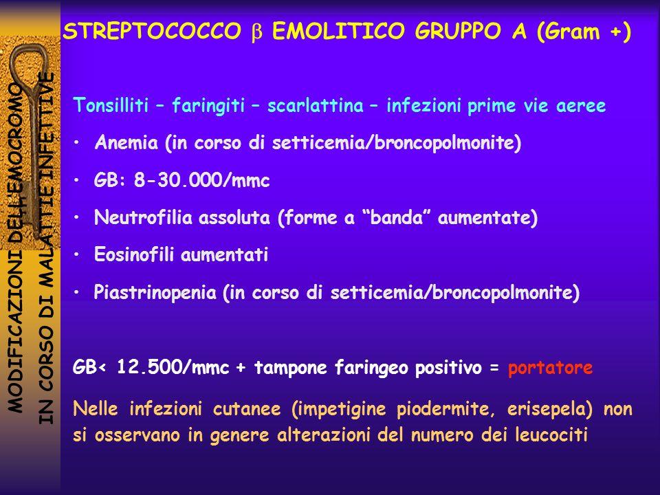 MODIFICAZIONI DELLEMOCROMO IN CORSO DI MALATTIE INFETTIVE STREPTOCOCCO EMOLITICO GRUPPO A (Gram +) Tonsilliti – faringiti – scarlattina – infezioni pr