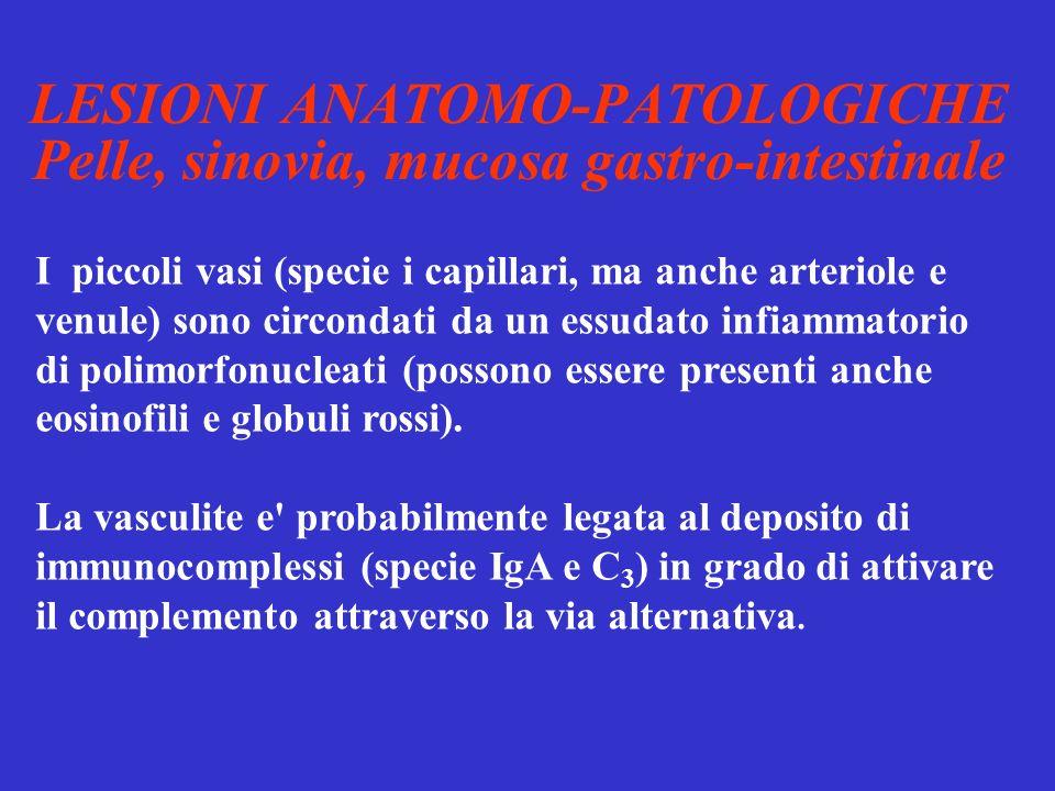 LESIONI ANATOMO-PATOLOGICHE Pelle, sinovia, mucosa gastro-intestinale I piccoli vasi (specie i capillari, ma anche arteriole e venule) sono circondati