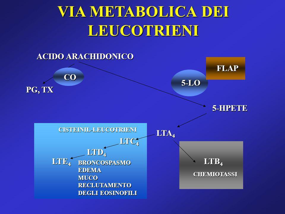 VIA METABOLICA DEI LEUCOTRIENI ACIDO ARACHIDONICO 5-LO FLAP 5-HPETE LTA 4 LTB 4 LTD 4 LTC 4 LTE 4 PG, TX CISTEINIL-LEUCOTRIENI CHEMIOTASSI BRONCOSPASM