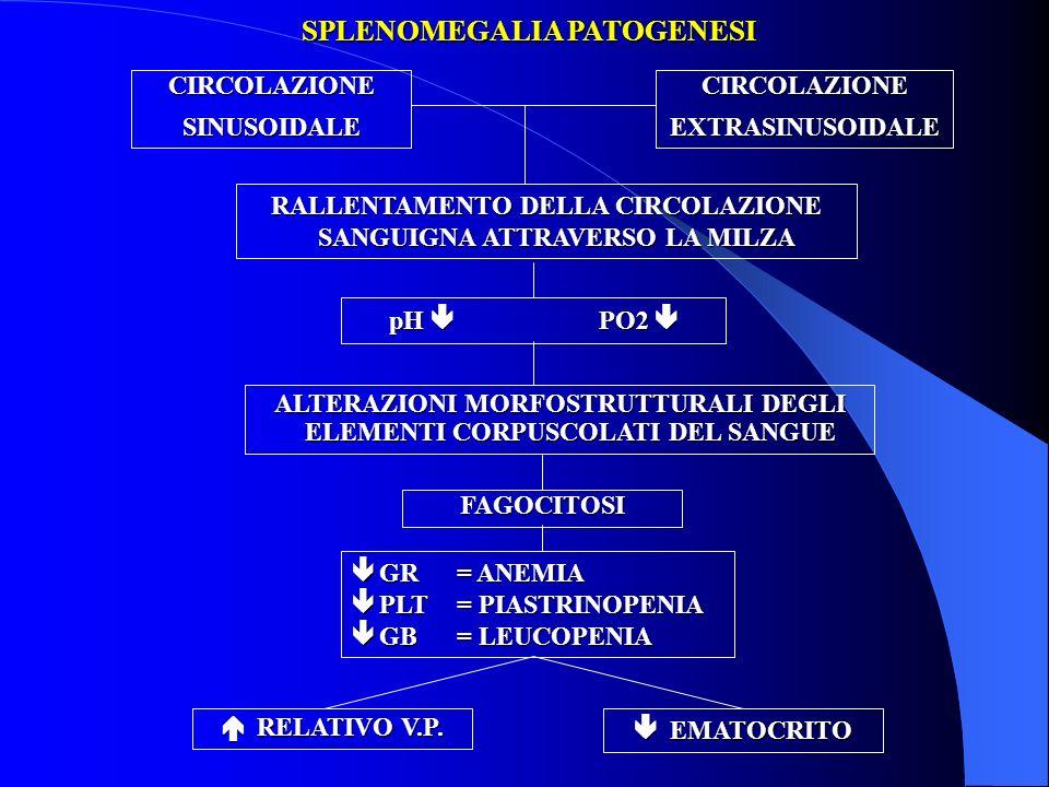 SPLENOMEGALIA PATOGENESI CIRCOLAZIONESINUSOIDALECIRCOLAZIONEEXTRASINUSOIDALE RALLENTAMENTO DELLA CIRCOLAZIONE SANGUIGNA ATTRAVERSO LA MILZA pH PO2 pH