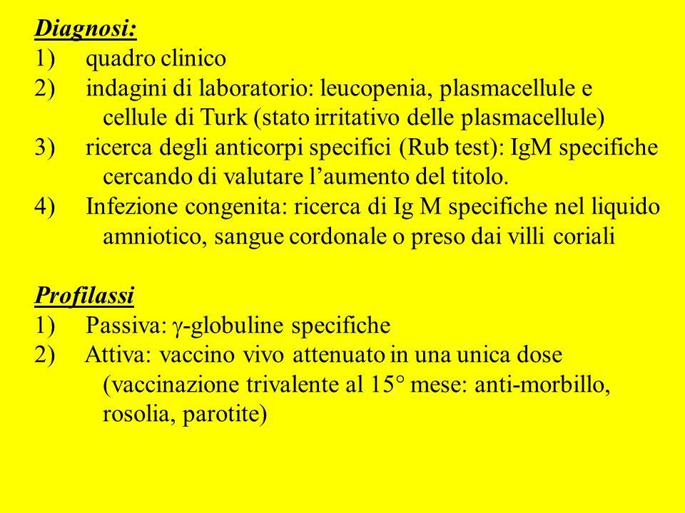 Diagnosi: 1) quadro clinico 2) indagini di laboratorio: leucopenia, plasmacellule e cellule di Turk (stato irritativo delle plasmacellule) 3) ricerca