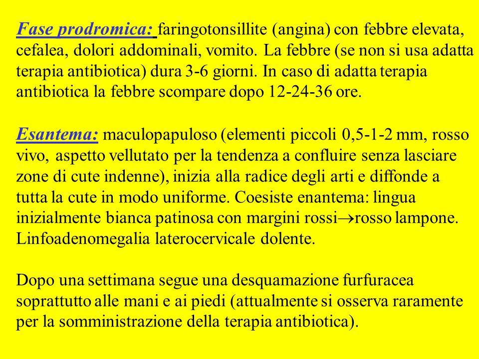 Fase prodromica: faringotonsillite (angina) con febbre elevata, cefalea, dolori addominali, vomito. La febbre (se non si usa adatta terapia antibiotic