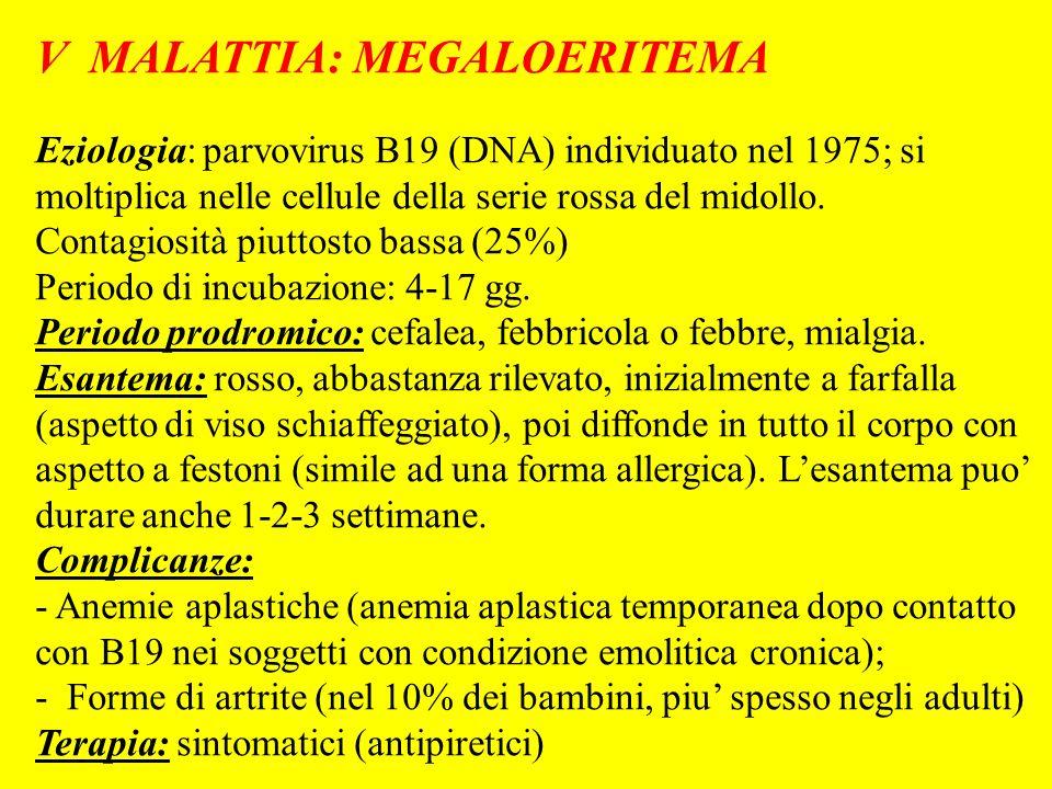 V MALATTIA: MEGALOERITEMA Eziologia: parvovirus B19 (DNA) individuato nel 1975; si moltiplica nelle cellule della serie rossa del midollo. Contagiosit