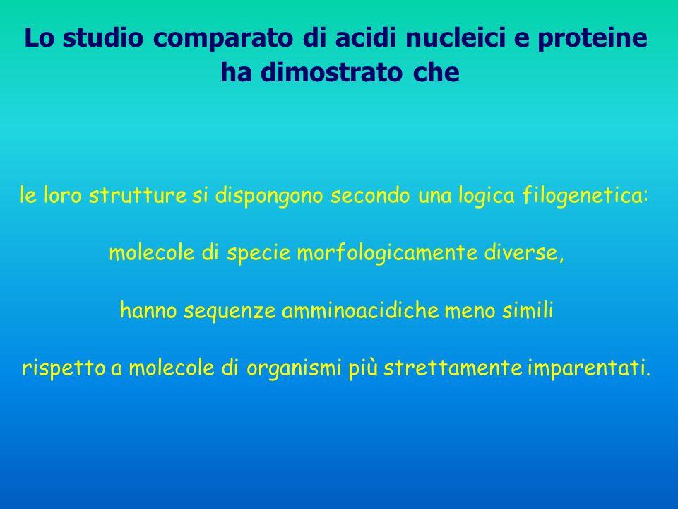 le loro strutture si dispongono secondo una logica filogenetica: molecole di specie morfologicamente diverse, hanno sequenze amminoacidiche meno simil