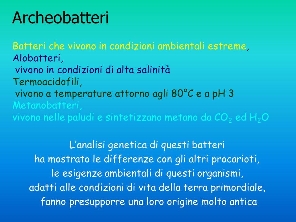 Archeobatteri Batteri che vivono in condizioni ambientali estreme, Alobatteri, vivono in condizioni di alta salinità Termoacidofili, vivono a temperat