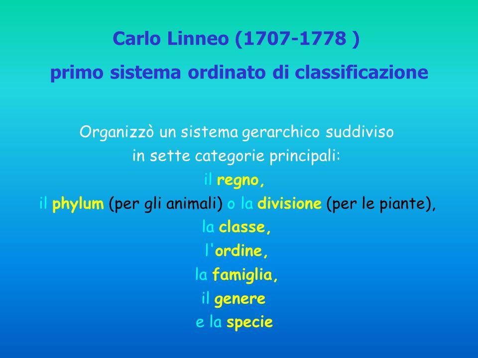 Organizzò un sistema gerarchico suddiviso in sette categorie principali: il regno, il phylum (per gli animali) o la divisione (per le piante), la classe, l ordine, la famiglia, il genere e la specie Carlo Linneo (1707-1778 ) primo sistema ordinato di classificazione