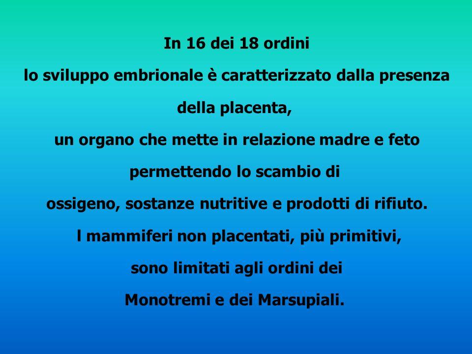 In 16 dei 18 ordini lo sviluppo embrionale è caratterizzato dalla presenza della placenta, un organo che mette in relazione madre e feto permettendo l