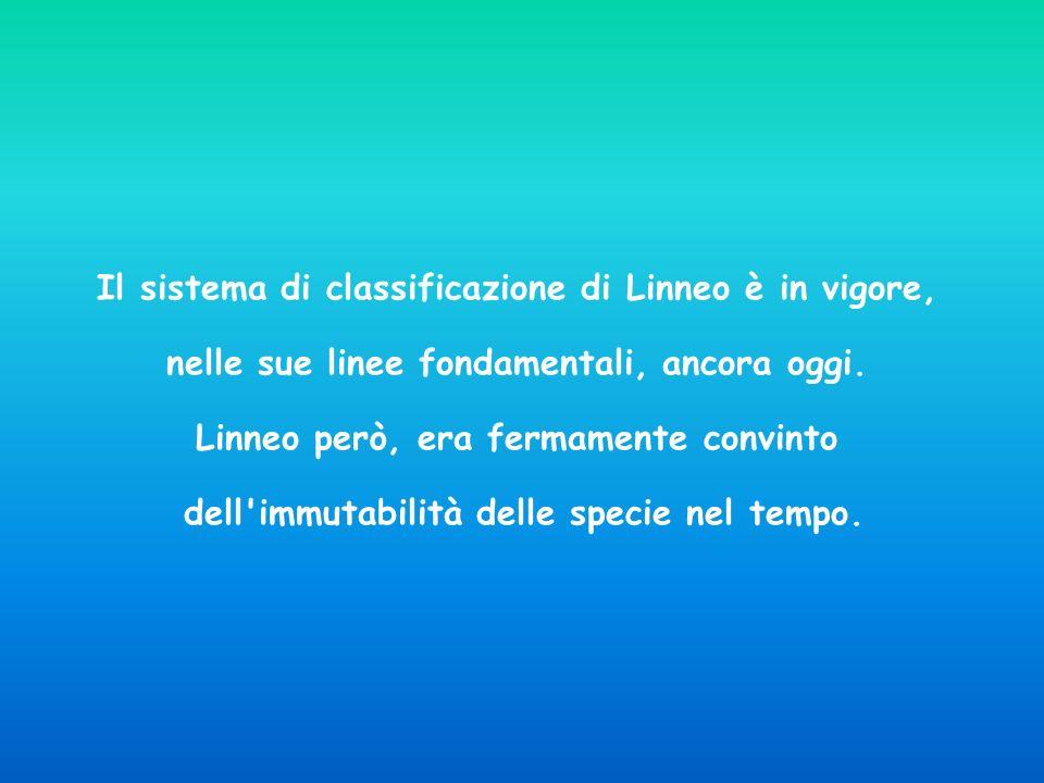 Il sistema di classificazione di Linneo è in vigore, nelle sue linee fondamentali, ancora oggi. Linneo però, era fermamente convinto dell'immutabilità