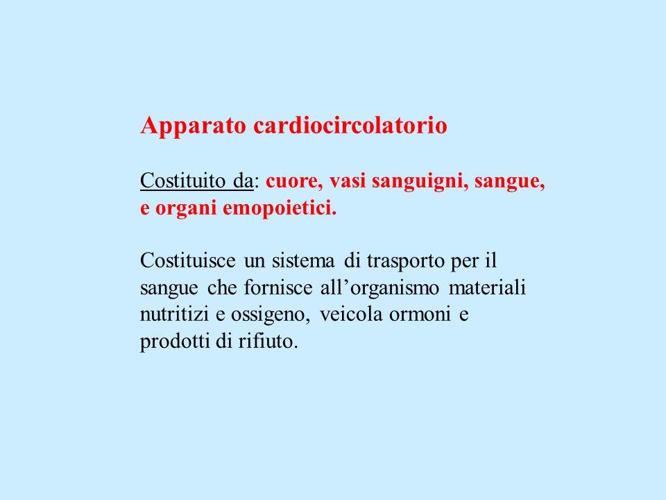 Apparato cardiocircolatorio Costituito da: cuore, vasi sanguigni, sangue, e organi emopoietici. Costituisce un sistema di trasporto per il sangue che